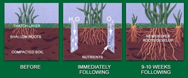 Aera-Vation Seeding and Fertilizing